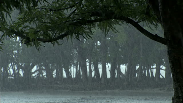 Scary Sundarbans heavy rainfall
