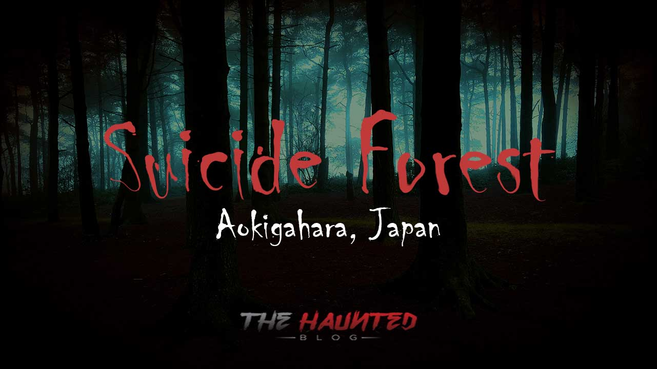 The Horror in The Haunted Suicide Forest: Aokigahara, Japan