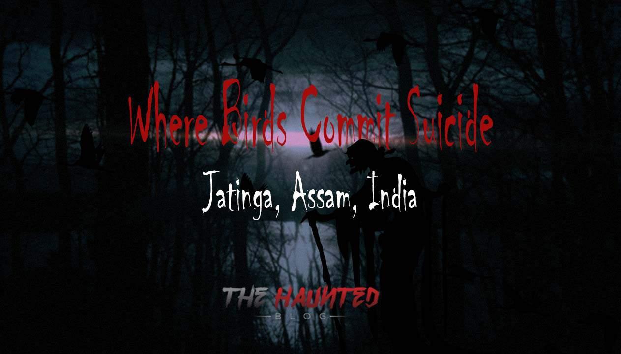 Where Birds Commit Suicide - Jatinga